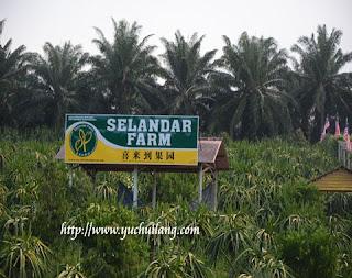 Dusun Selandar