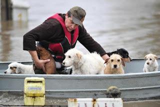 Pedro Ramos foi resgatado com os sete cães da família Foto: Diego Vara / Agencia RBS