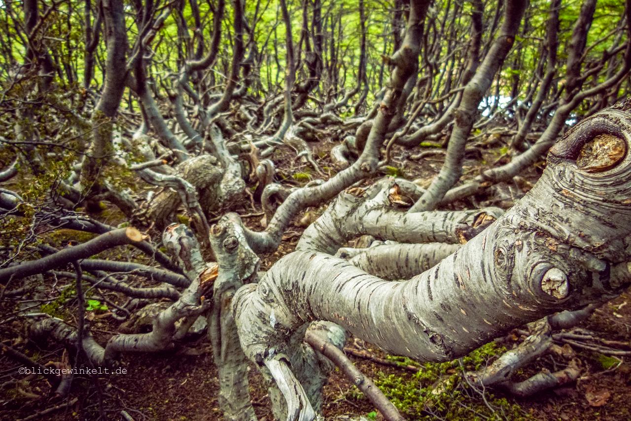 Auf der Erde kriechende Baumstämme