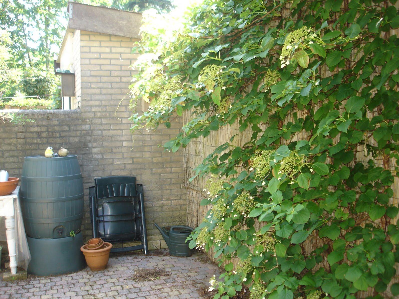 Ikbenik en jijbentjij een merelnest in mijn tuin for Vliegen in de tuin