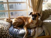 Nelly e seu banho de sol