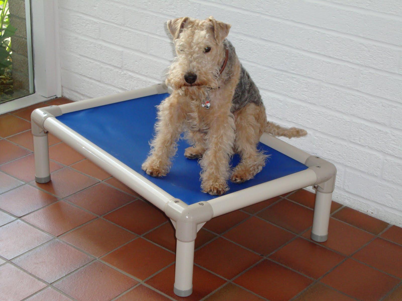 kuranda the at beds love bed fence dog