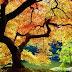 Outono! (Autumn!)