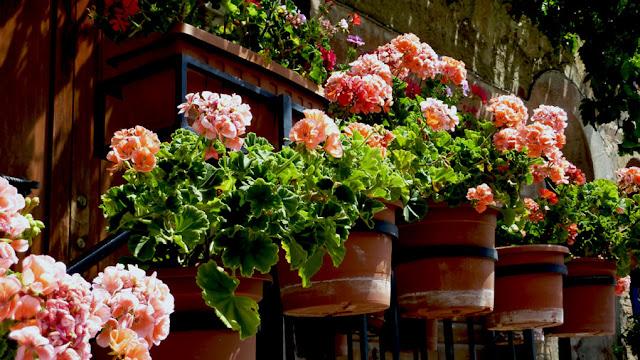 Il mondo in un giardino giardini in vaso for Laghetto giapponese