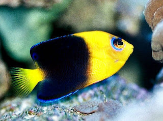 Funny pictures gallery aquarium fish freshwater aquarium for Tropical fish diseases pictures