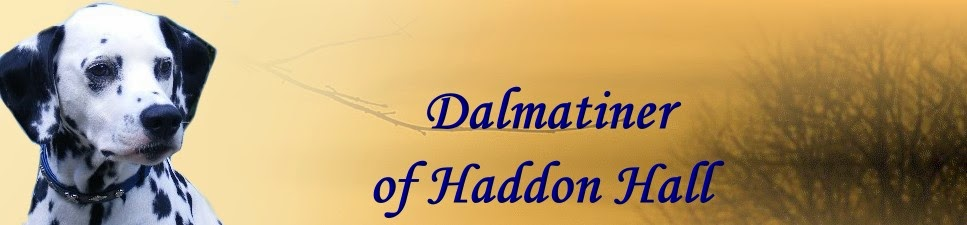 Dalmatiner of Haddon Hall