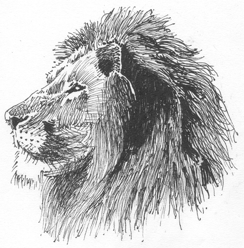 lion side drawing