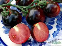 violet black tomato