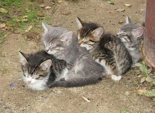 funny sleeping cats 1