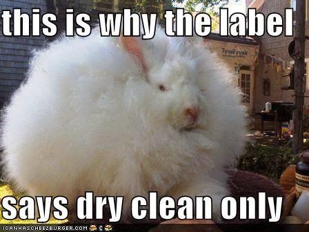 Cute animal memes clean - photo#26
