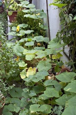 Hokaido rastline