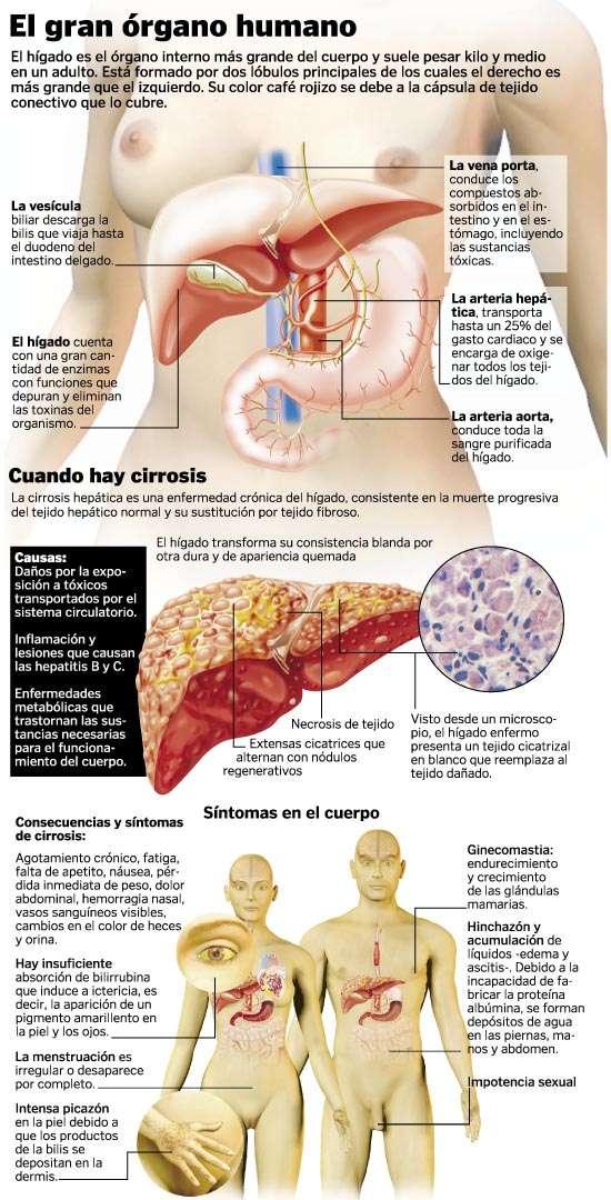 FISIOTERMICO: El hígado una máquina perfecta, pero olvidada