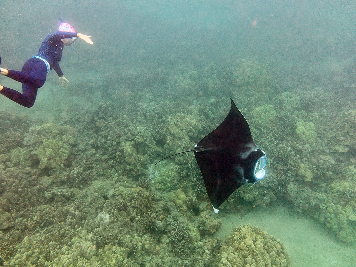 http://www.tropicallight.com/swim1/28sep14mantas/28sep14mantas.html
