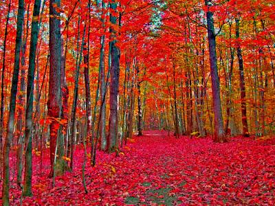pintar paisaje otoño