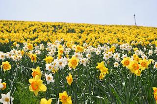 musim bunga di jepun