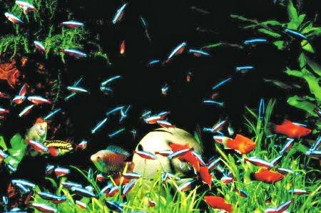 kulturschock tipps f r die aquarienpflege so bleibt ihr. Black Bedroom Furniture Sets. Home Design Ideas