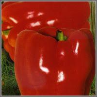 Сладкий перец сорт «Толстый барон»