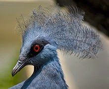 Burung endemik Tanah Papua