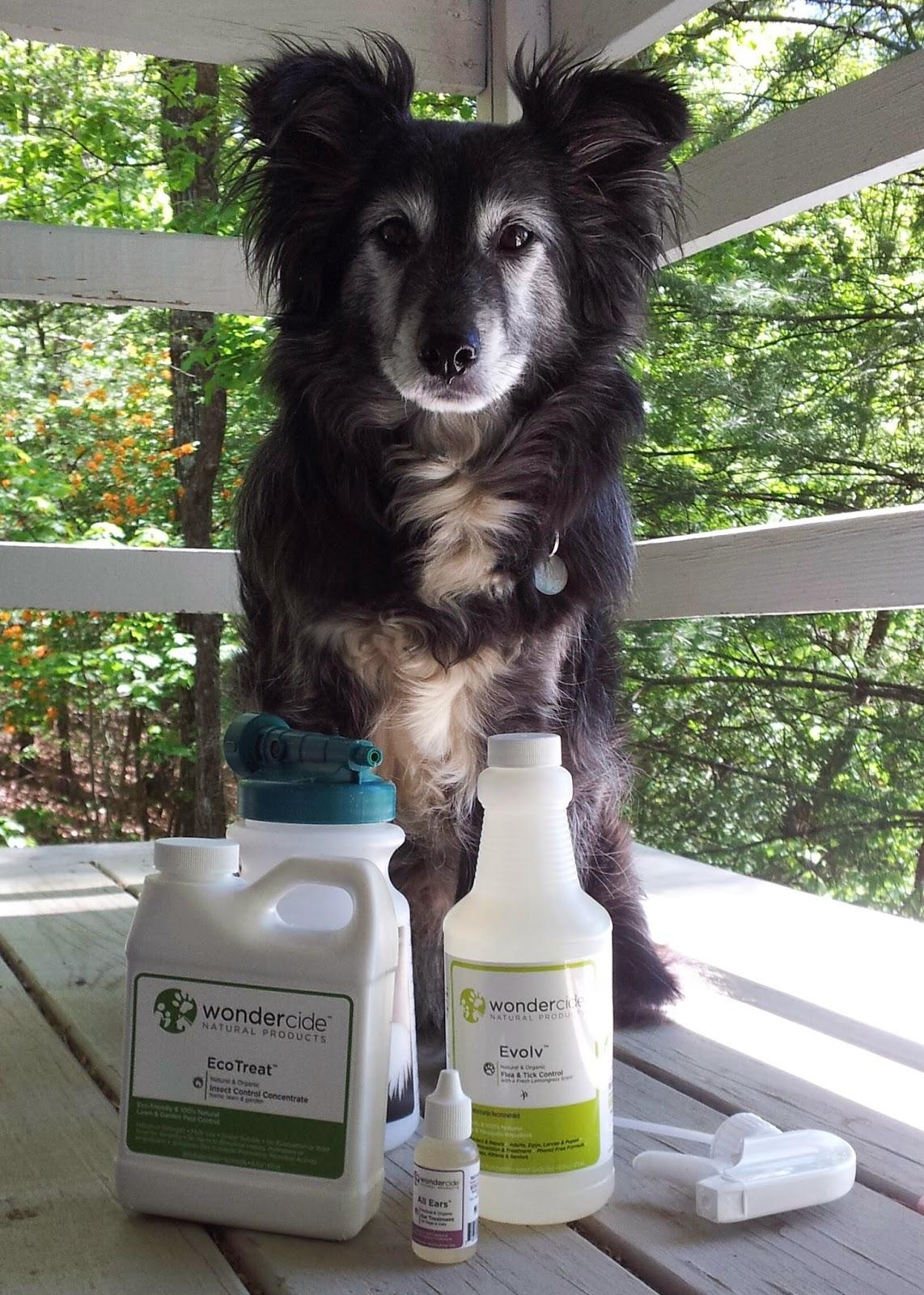 Treating Dog Ear Mites Olive Oil