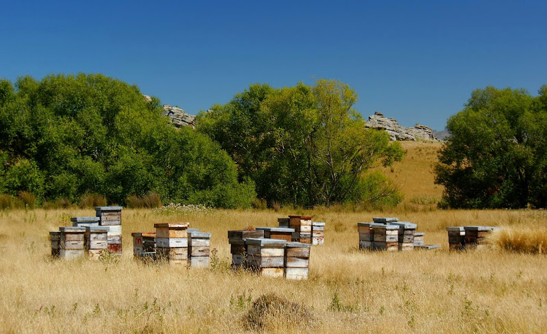 Beehives near Ophir, Central Otago