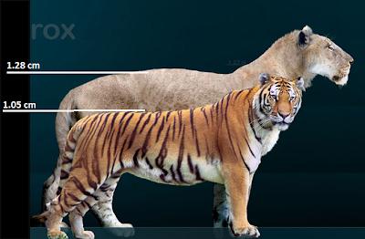 un tigre y un leon: