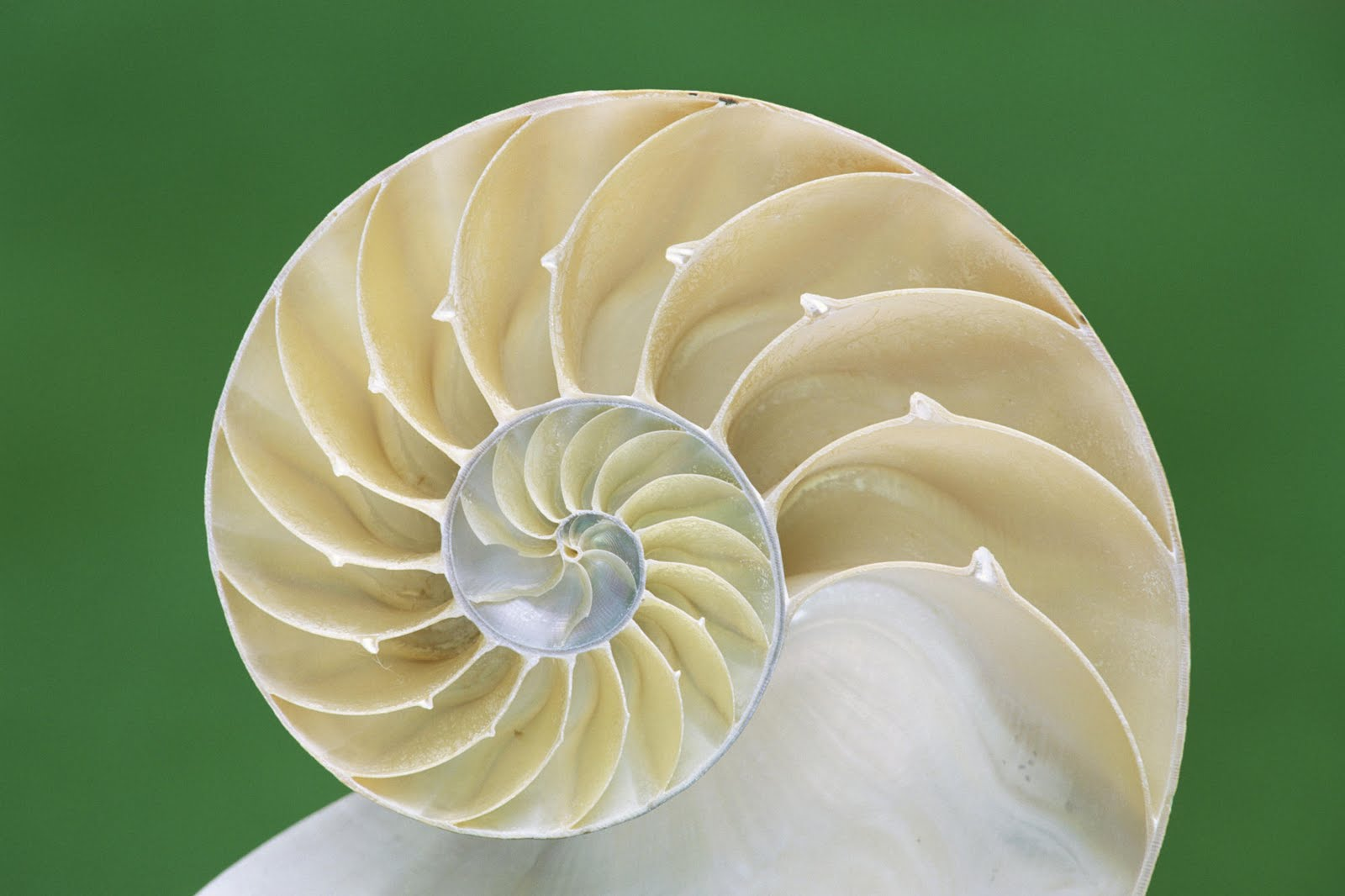 shell incorporation In the matter of royal dutch shell plc, and shell international exploration and production inc, respondents order instituting cease-and-desist proceedings.