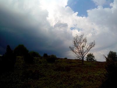 landscape germany: Heide near Schneeverdingen