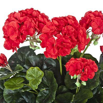 Hogar 10 consejos para obtener un hermoso jard n con geranios - Cuidados de una hortensia ...