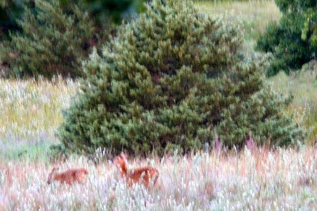 two fawns, where's mom?