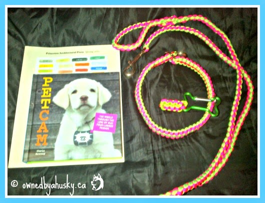 paracord collars and leashes