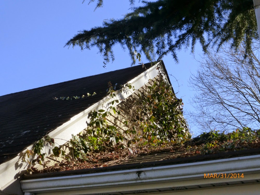Gutter Repair and Cleaning + Preventative Maintenance