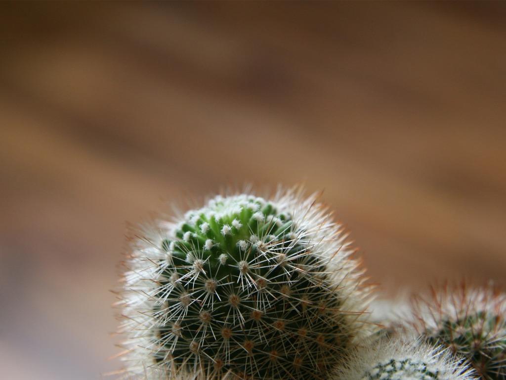 http://3.bp.blogspot.com/-RcoF_PjMZDs/TloOz9P32jI/AAAAAAAAAJg/SJrOYlv7Zio/s1600/Cactus-download-free-wallpapers-for-desktop-1024-x-768-picture-computer-plants.jpg