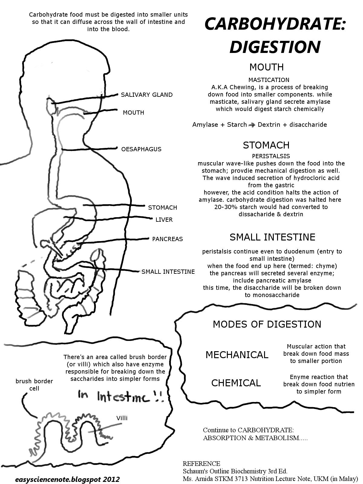 biochemistry digestive system notes
