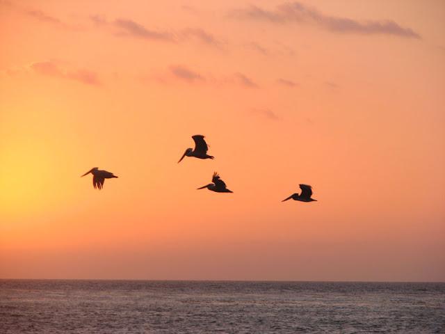 carmel beach sunset birds