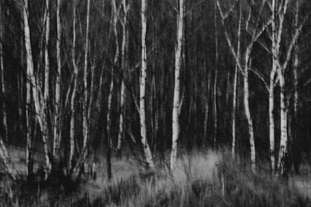 Las brzozowy. Koncepcyjna fotografia krajobrazu. Ruda Śląska. fot. Łukasz Cyrus