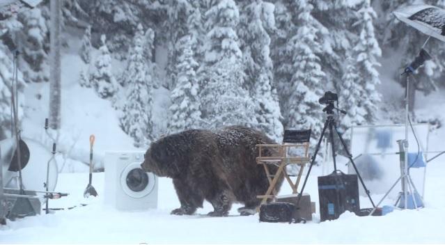 bjørn sverige