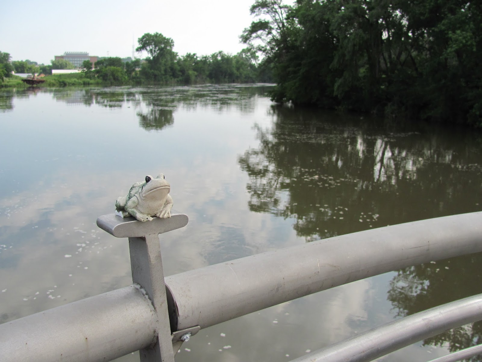 Frog poses on the Iowa River Power bridge in Coralville, Iowa