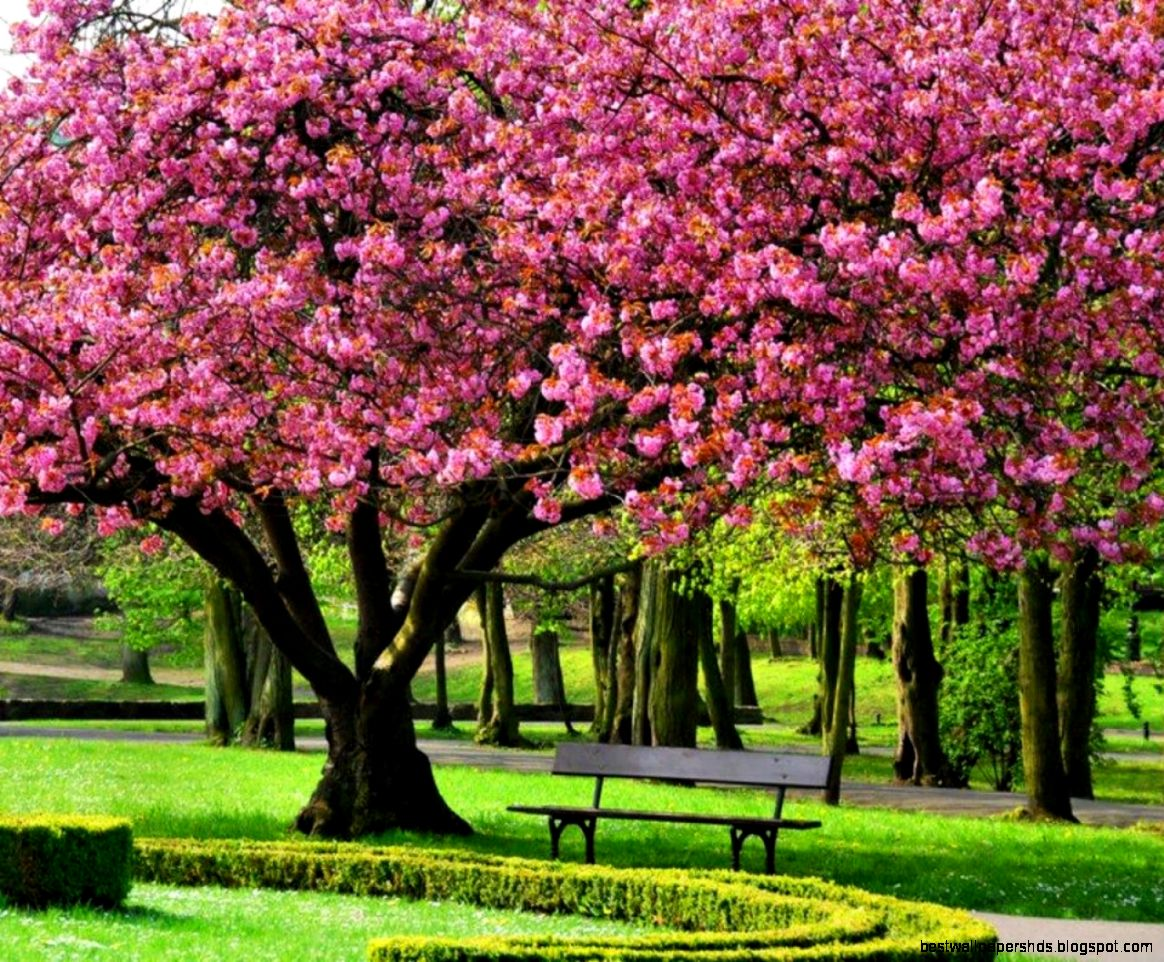 pink spring trees wallpaper - photo #4