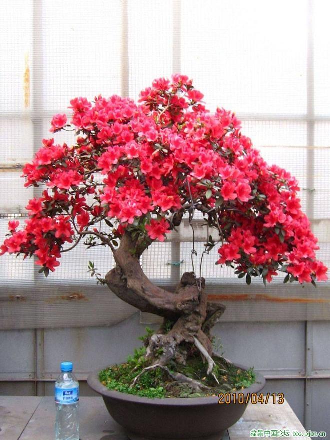 Proyecto resort y bonsai cali - Cultivo de bonsai ...