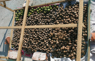 Lots of walnuts drying in the sun