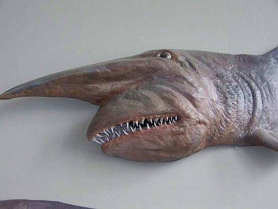 razor fish