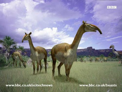 mamiferos extintos de la argentina Macrauchenia craneo