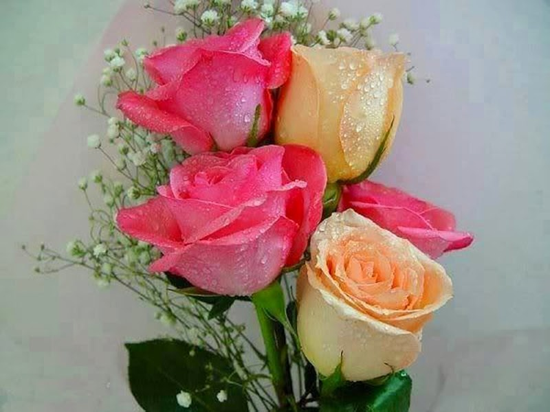Romantic Pink Orange Roses Flowers Images For Friends