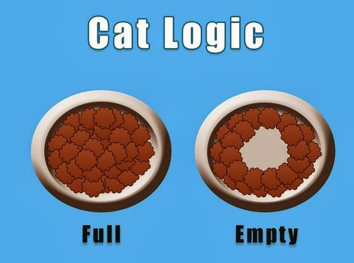 cat people problems-3