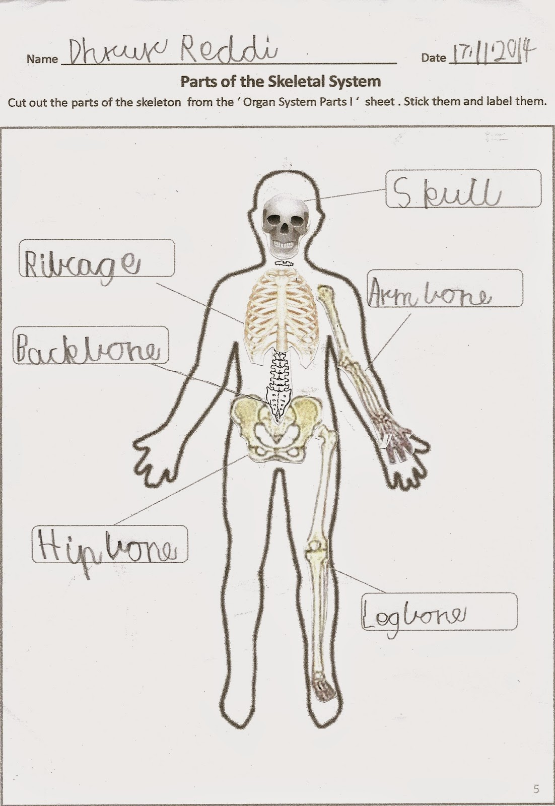 Skeletal System Cut & Paste Worksheet for grade 3 & 4