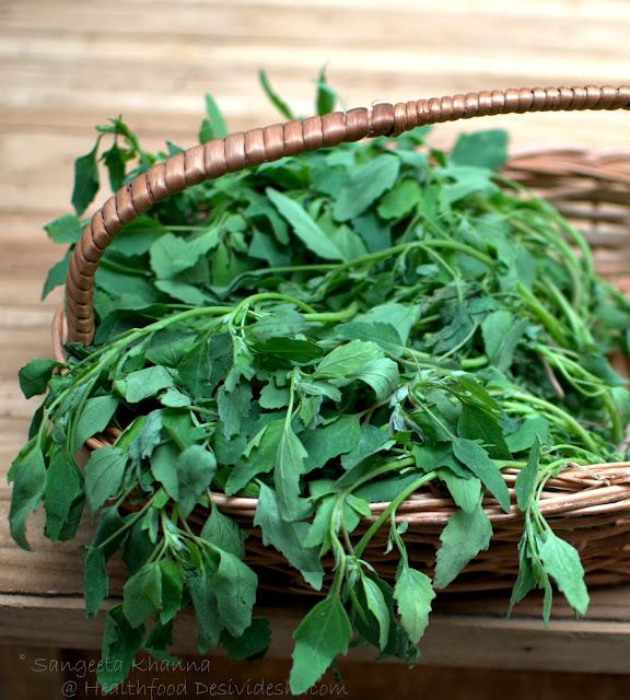 Bathua or Chenopodium greens, health benefits and recipes of bathua raita and bathua kadhi