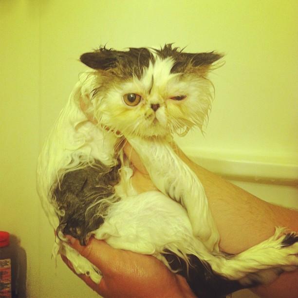 Сумасшедшие коты, фото 30