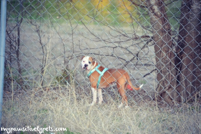 Find lost pets easily with Tagg