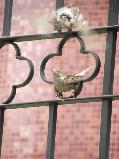 pássaro se assusta com a chegada de outra ave