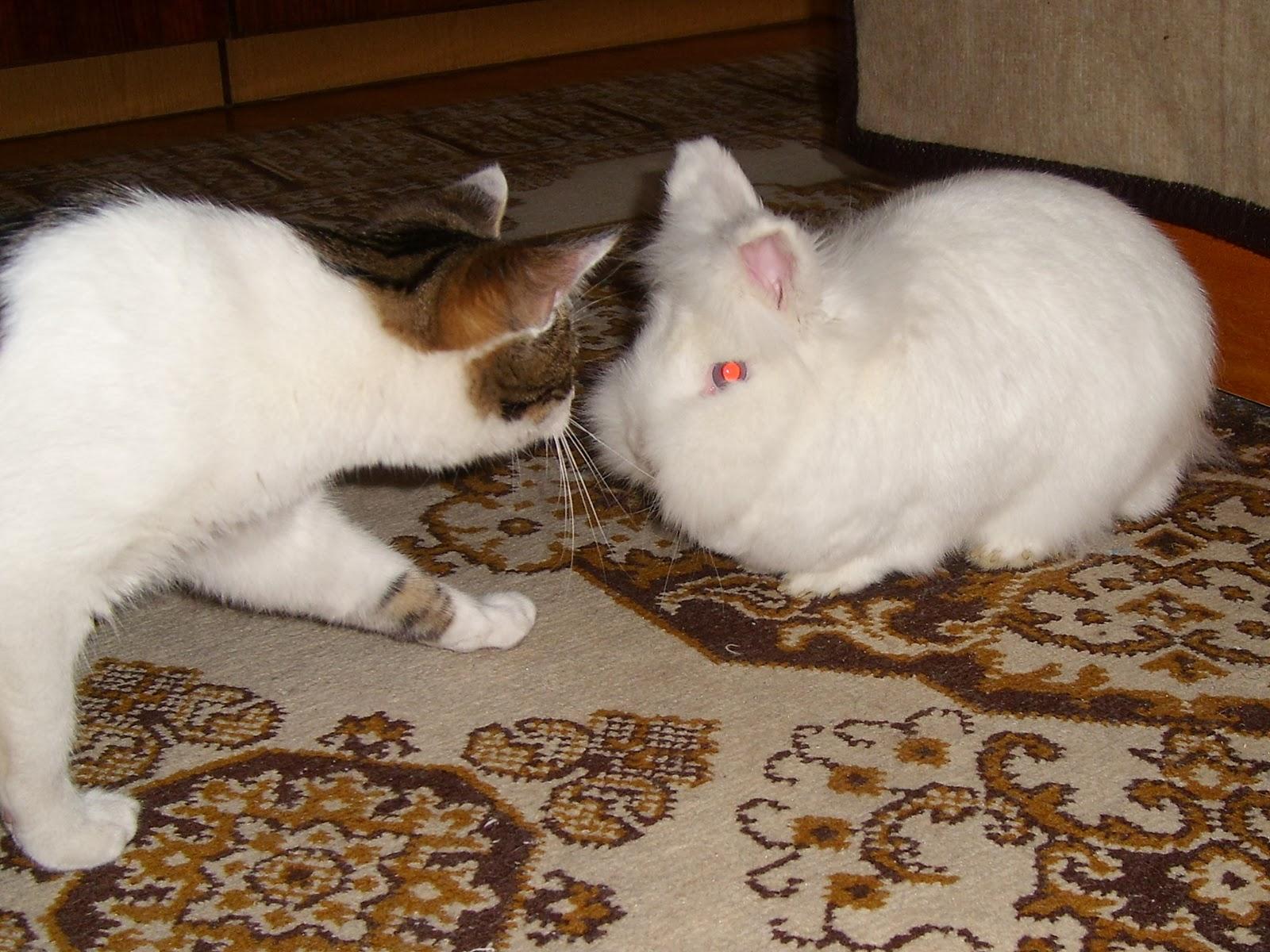 Pami és Cirmó.